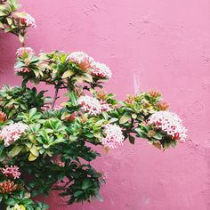 Flowers agains a pink wall #inspiration