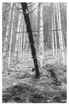 #tree #nature #diagonal PHOTOGRAPHIE © [ catrin mackowski ]