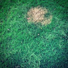 www.infectedgallery.com #grass #nature #green