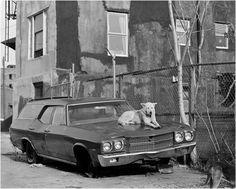 tumblr_m3sq0iTpef1qb2dp9o1_1280.jpg (1024×822) #black and white #photo #1986 #matt weber