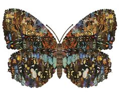 elphicks — Sharon ElphickButterfly (large) #butterfly #collage