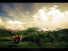 Ram Reddy #photography