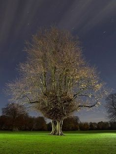 Freelance Photographer, Brighton, Sussex, UK : Photography by Jean-Luc Brouard : Photography Gallery: Personal #photo #tree