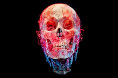 Bodies & Skulls on Behance #skull #photography #anatomy #keletoon