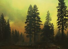 KINGS CANYON - Navis Photography #burned #photography #fire #forest #trees