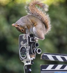 Squirrel Warhol by Max Ellis #inspiration #photography #animal