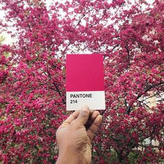 CJWHO ™ (The Pantone Project by Paul Octavious Paul...)