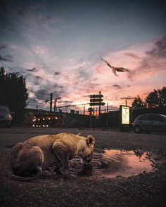 Dreamlike Photo Manipulations by Hansruedi Ramsauer