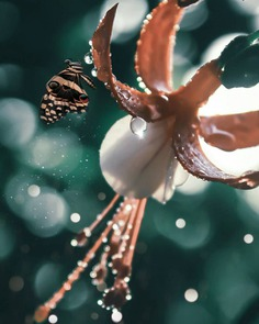 Conceptual and Fine Art Flower Photography by Niloofar Balalami