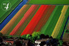 1218746687lhwQnl1.jpg 900×600 pixels #flowers