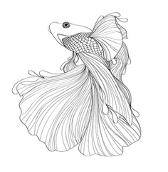 Siamese Fighting Fish on Behance