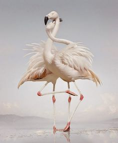 Until the Kingdom Comes by Simen Johan #animal #photography #inspiration