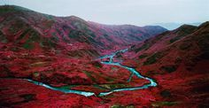 Fine Art Landscapes by Richard Mosse #inspiration #photography #landscape