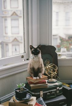 My world and my crayons. #interior #waiting #feline #books #cat #photography #window #animal