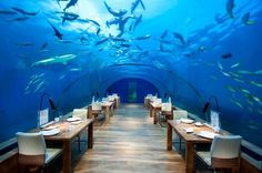 Artistic restaurant – inspiring view from underwater restaurant Ithaa