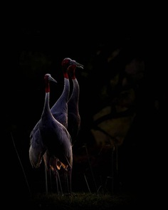 #bird_brilliance: Adorable Birds Photography by Vishal Monakar