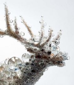 Crystal Bead Taxidermy by Kohei Nawa #taxidermy #crystal #beads #elk #art
