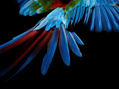 Perroquet 06.jpg, oct 2008 #photography #parrot #bird