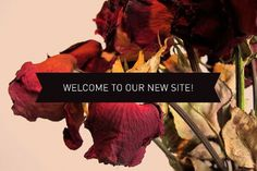 Meadowlark | Jewellery #minimal #typography