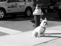 Puppers waiting outside of Ost Cafe | Flickr - Photo Sharing! #dog