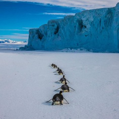 Paul Nicklen Documents The Ice and Wildlife of The Polar Regions