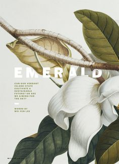 Esquire: Art direction, design, etc. - Rebecca Chew #layout #botany #botanical #plant #flower #magnolia