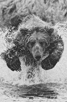 Amazing photograph of a bear #bear #photography #water #nature