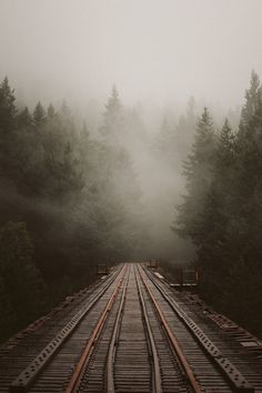 Lyla #train #forest #track #fog