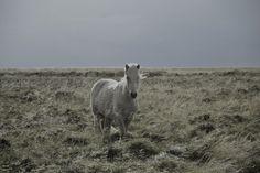 K A M I L A N O R A N E T I K #wild #horse #unicorn #landscape #photography
