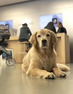 Most Dog Friendly Stores in America - The Apple Store