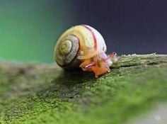 snail Durch ihre Größe im Millimeterbereich, ließ sich die Schnecke nur mit viel Gedult verewigen. An diesem Motiv gefällt mir besonders #macro #snail