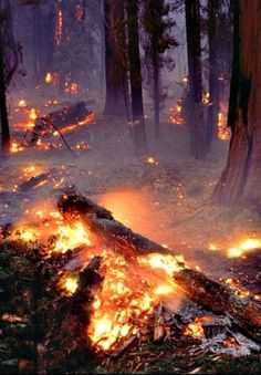tumblr_lzawhs53II1qbha9co1_1280.jpg (522×751) #photography #fire