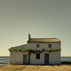 manipulated #vine #house #space #landscape #grape
