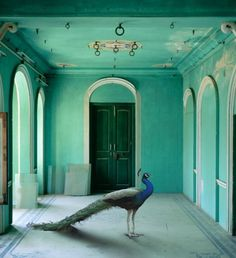 India Song by Karen Knorr #inspiration #photography #art