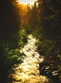 Circa 1983 - The Photo Roll of Owen Perry #photography #forest #nature #sunlight #creek