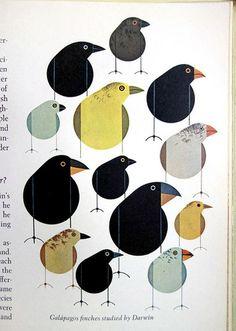 DSC06339 #charley #birds #harper
