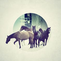 RichieSwims #illustration #photo #circle #horses