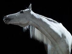 John Ross — Homepage #horse
