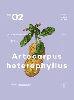 A Few Plants 02 #poster #plants #type #typography #minimal #series #color #botany