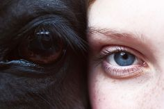 tumblr_lllmvi2Dko1qhiio2o1_500.jpg (500×333) #eyes #cow #skin #fur #hores #face #buffalo #animal