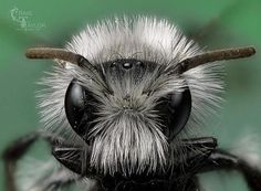 Macro Photography by Craig Taylor | Professional Photography Blog #inspiration #photography #macro