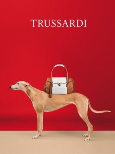 Models Show for Trussardi by William Wegman #model #clothes #photography #fashion #dog