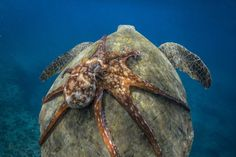 Turtle-Back Ride by Michael B. Hardie
