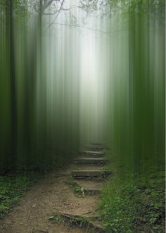 ELLEN JANTZEN: Disturbing The Spirits #photography #photo manipulation #green #forest #trees #path #steps #spirits #blurred