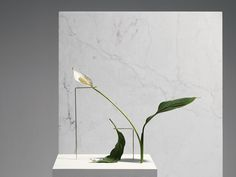 Postures Vases by Bloc Studios