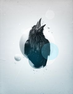 freenge #design #bird