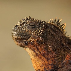 Spectacular Wildlife Animals Portraits by Andy Rouse