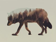 Double Exposure's by Andreas Lie