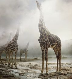 Until the Kingdom Comes by Simen Johan #inspiration #photography #animal