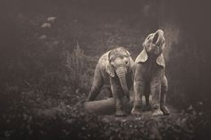 africa-souls-zoo-photography-manuela-kulpa-11 #animals #photography